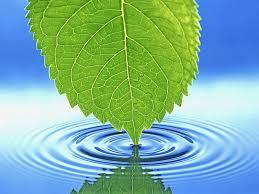 Вода – натуральное лекарство
