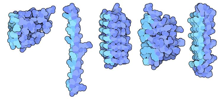 Диаграммы молекул антифриза, продуцируемых рыбами и насекомыми