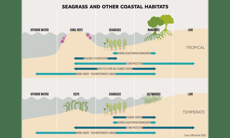 Изображение морских водорослей и других прибрежных экосистем.