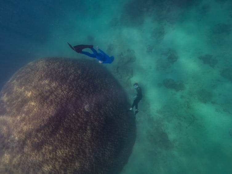 кораллы и ныряльщики